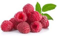 100% Pure Raspberry Ketone Extract